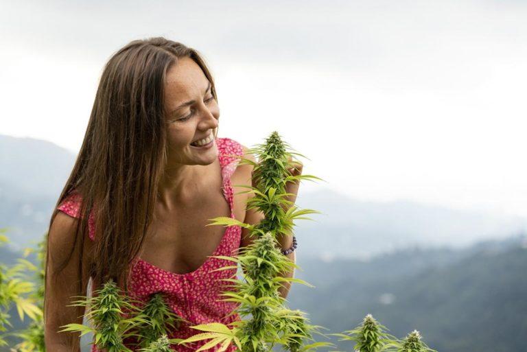 Co jest ważne przy uprawie marihuany?